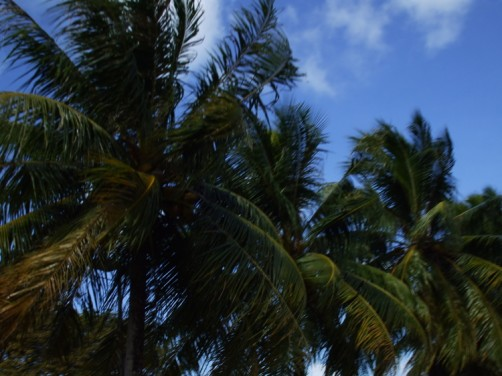 風にたなびくヤシの木