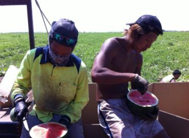 【セカンドビザ取得】オーストラリアのファーム生活は過酷労働すぎて黒人化した