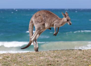 手持ち15万弱で単身オーストラリアに1年留学した話【準備編】